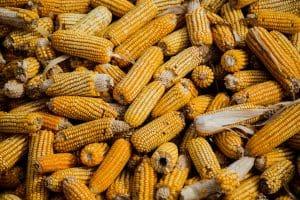 La nixtamalizzazione del mais